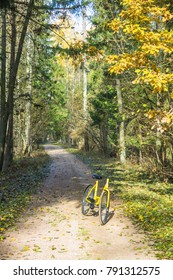 Bicycle in autumn forest Bialowieza Forest