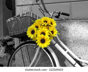 Bicycle decorated with sunflowers. BW image