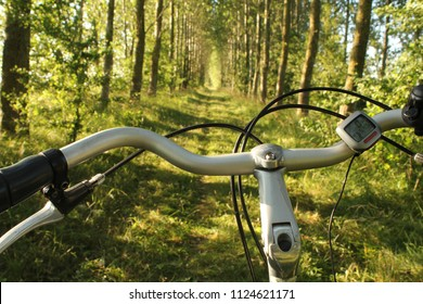 a bicycle handlebar closeup in nature with rows of long popular trees at both sides of the path and the road ahead in summer