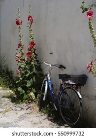 Bicycle and Hollyhocks Il de Re.