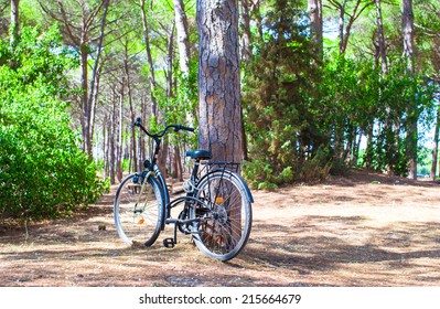 Bicycle near a tree in summer forest