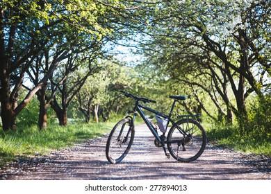 Bicycle on flowering alley