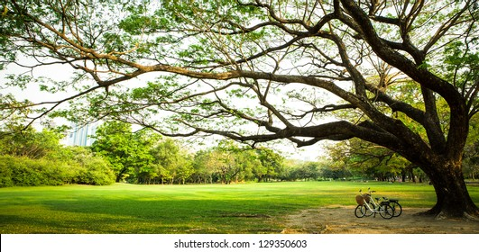 bicycle on green grass under Big tree in the park