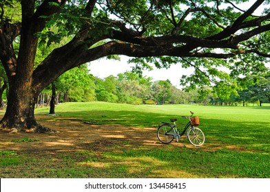 bicycle on green grass under Big tree