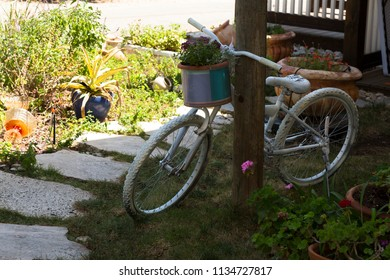 Bicycle painted white in a flower bed