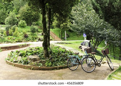 Bicycle parking in the garden