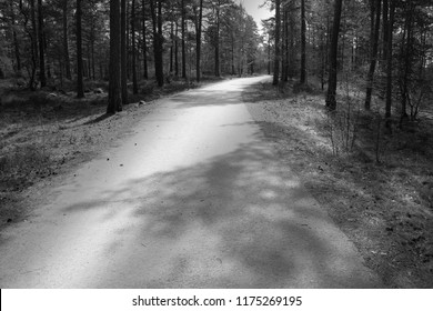 Bicycle path leading through the forest