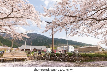 Bicycle with sakura tree