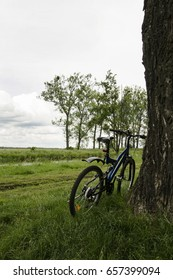 The bicycle stands near the tree