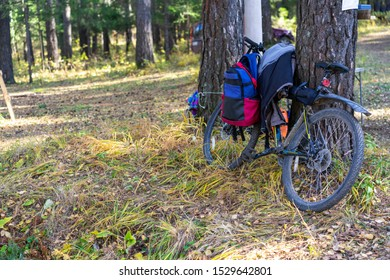 Bicycle stands near a tree in the forest. a backpack and a kurt hang on a bicycle
