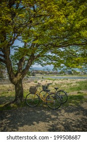 bicycle under the tree