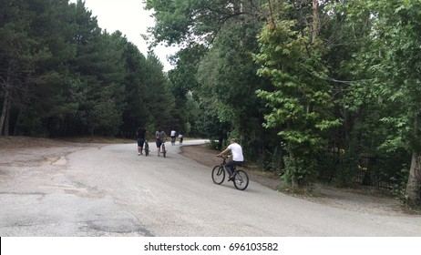 Bicycle way in forest.
