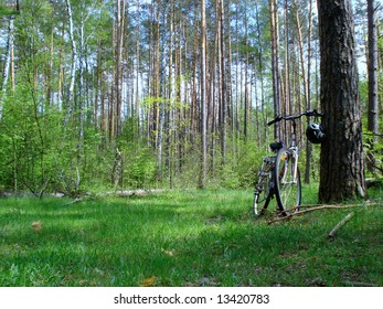 """""""bicycle in the woods"""""""