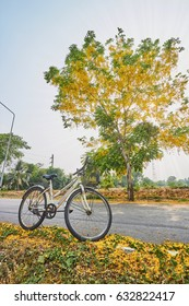 Bicycle and yellow flower tree at evening sunshine
