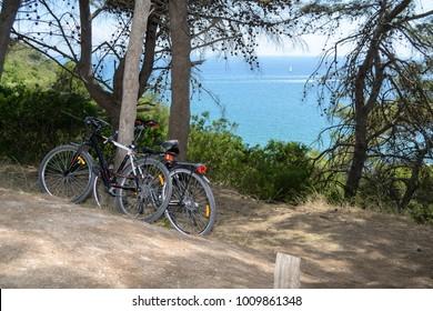 bicycles parked under sea pines, facing the Mediterranean Sea, Monte Argentario, Tuscany, Italy