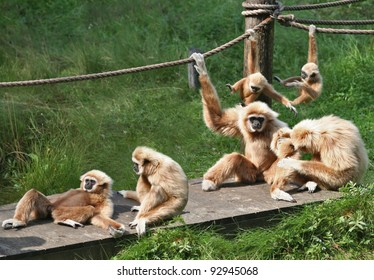 A bid family of monkeys playing around and enjoining themselves.