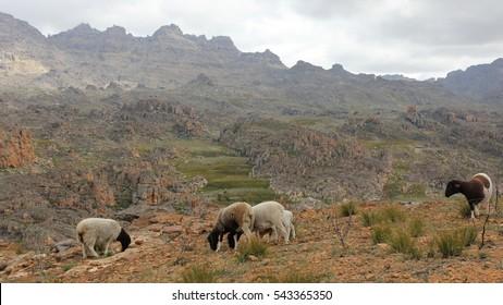 Biedouw valley