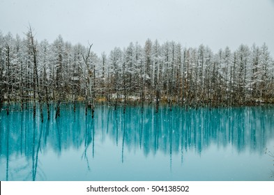 Biei Blue Pond- The Most Beautiful Pond In The World! The pond change color depends on season.