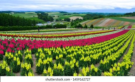 Biei, Japan - Jul 1, 2019. Colorful flower field in Shikisai-no-oka, a very popular spot for sightseeing in Biei Town, Hokkaido, Japan.