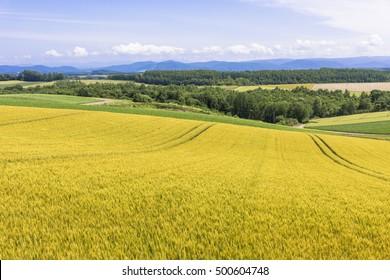 biei rural landscape