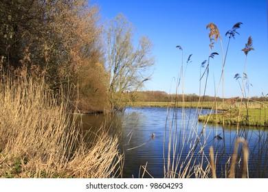 Biesbosch national park in Dordrecht Holland