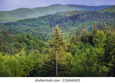Bieszczady Mountains in Poland, view from tourist tower in Szczerbanowka village