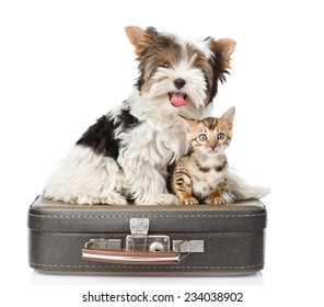 Biewer-Yorkshire terrier and bengal cat sitting on a bag. isolated on white background