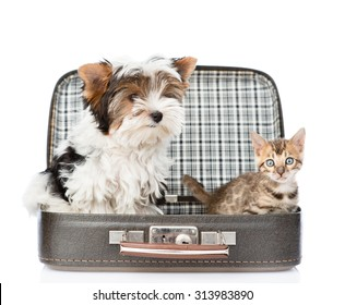 Biewer-Yorkshire terrier and bengal cat sitting in a bag. isolated on white background