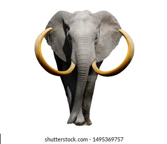 Big african elephant isolated on white background. 3d rendering.