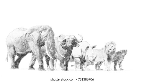 Big african five animal. Black and white sketch with pencil