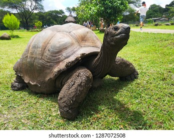 big african turtle