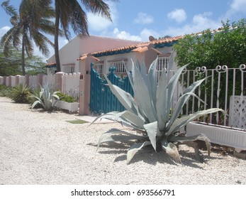 Big Agave plant in front of Caribbean house