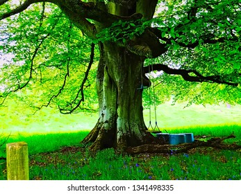 Big ancient tree with a swing in a shady playground garden in Scotland