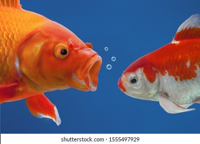A big angry fish shouting at a small one, the small goldfish looking down ashamed