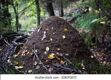 Big anthill in the woods.