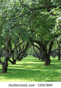 The big apple garden with large old trees and a green grass a years sunny day