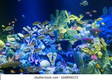 Big aquarium with amazing colourful corals and fishes