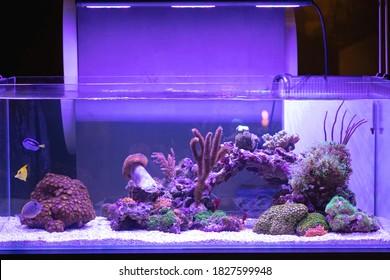 Big Aquarium With Coral Reef Fish Tank