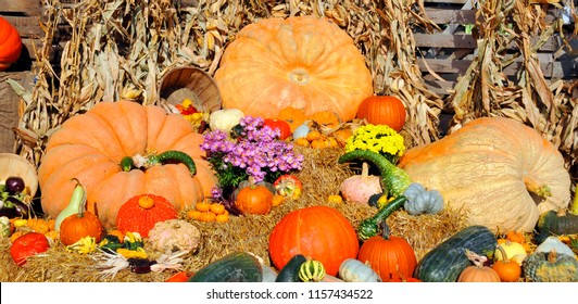 Big assortment of decorative pumpkins and flowers in market