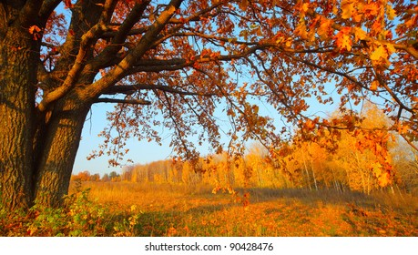 Big autumn oak with yellow leaves on a meadow