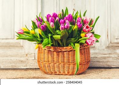 Big basket full of many fresh colorful tulips, outdoors
