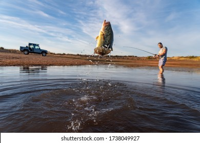 Big Bass Large mouth - Fishing on lake with blue sky at dawn, sunrise