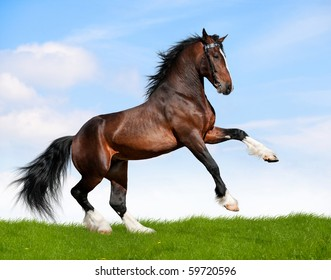 Big bay horse in field