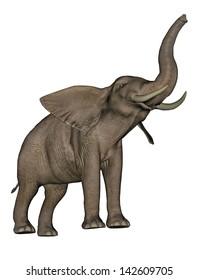 Big beautfiul elephant trunk up in white background