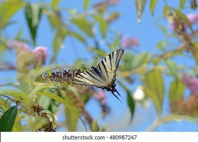 big beautiful butterfly sitting on flower