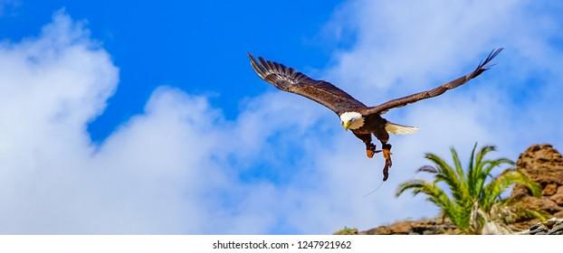 Big beautiful Eagle