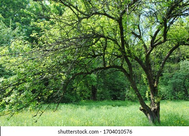 Big beautiful green tree in nature