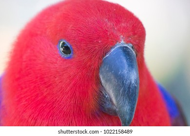 The big beautiful parrot very much decorates with himself the nature