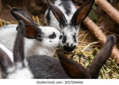 Big beautiful rabbits, bunny near a rabbit-hole (form)