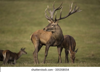 Big and beautiful red deer in the nature habitat in Czech Republic